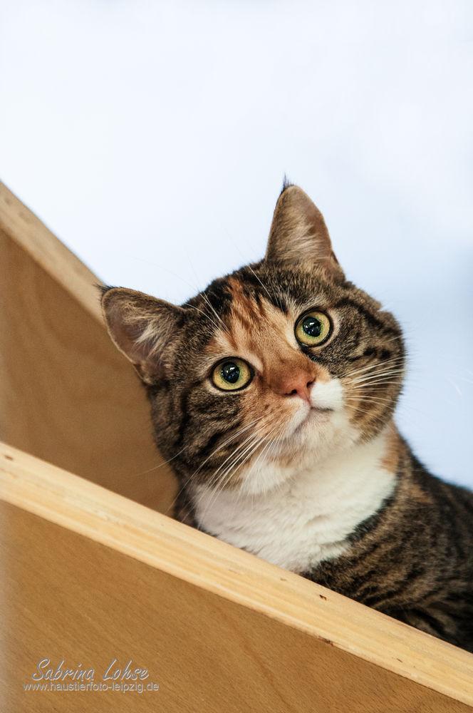 Katze Kessy